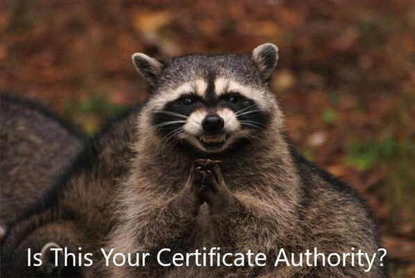 image of racoon implying poor pki certificate authority for enterprise is bad idea